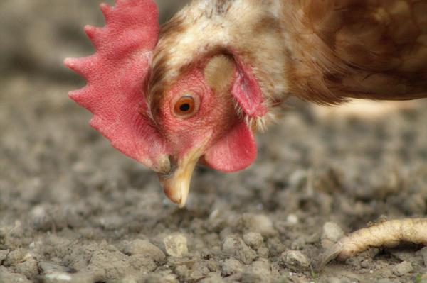 ВМарий Элиз-за карантина запрещена продажа птицы