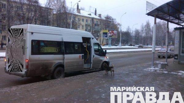 Заруль под кайфом: вЙошкар-Оле схвачен шофёр маршрутки