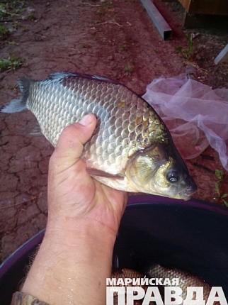 реки донбасса рыбалка